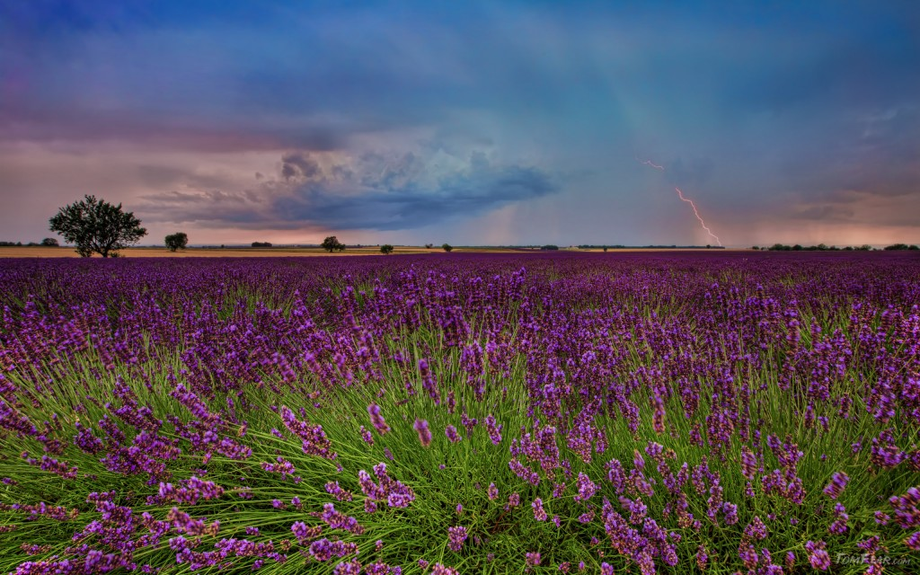 Provence02b