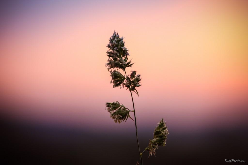 grass_on_sunset
