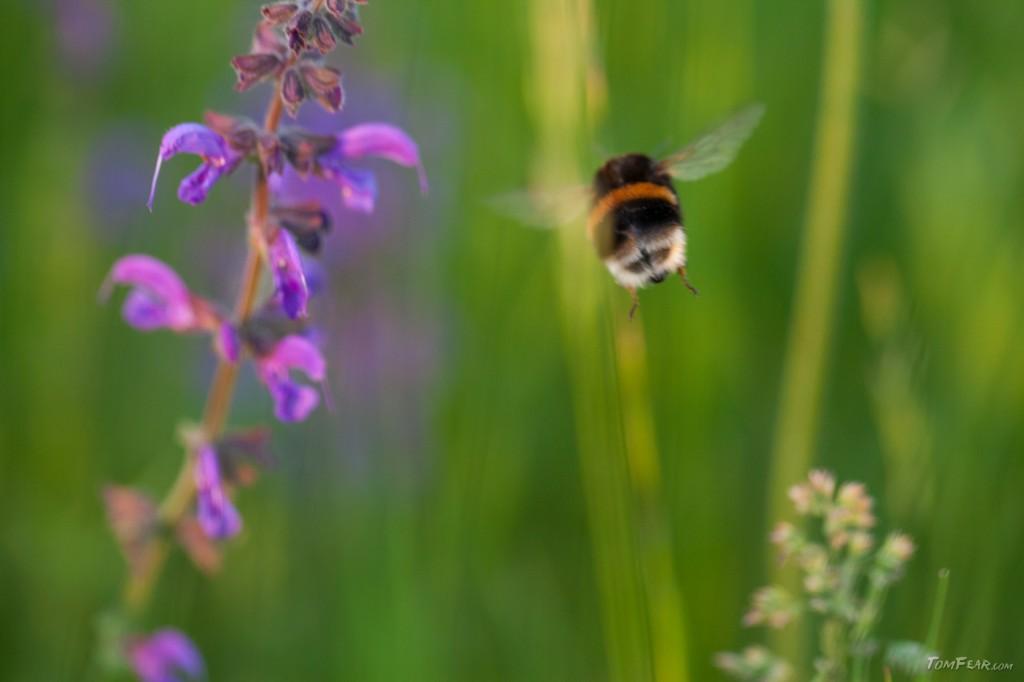 bumblebee2